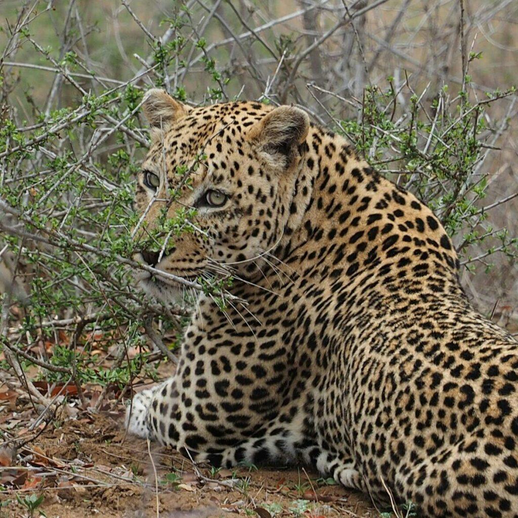 Mbazi Safaris