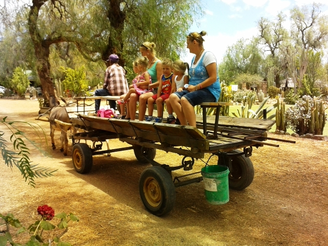 Highgate Ostrich Show Farm - Activities - Oudtshoorn
