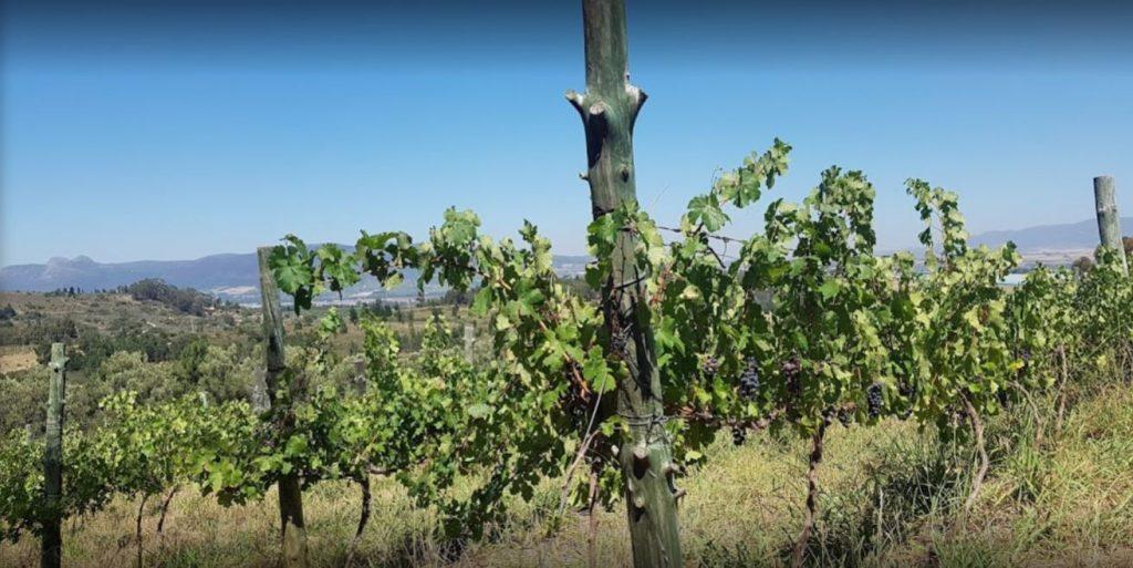 Upland Organic Estate, wine farm, Wellington, Western Cape, local wine
