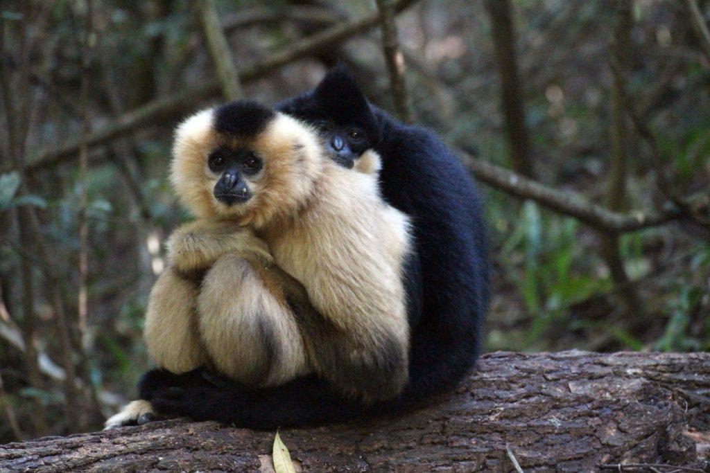 SAASA Monkeyland-KZN