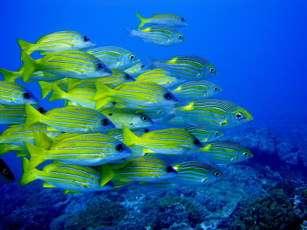 Reefteach, scuba diving, self-catering, accommodation, Sodwana Bay, KwaZulu-Natal