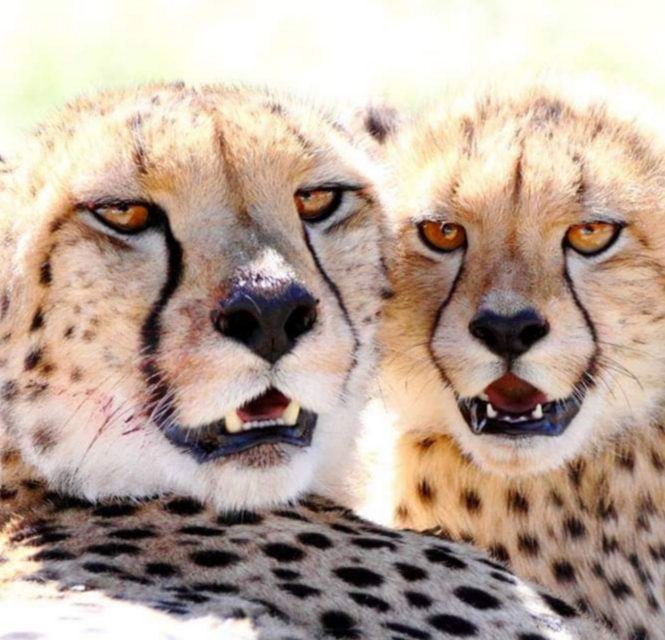 Zanchieta Wildlife Rehabilitation Centre - Bloemfontein 1