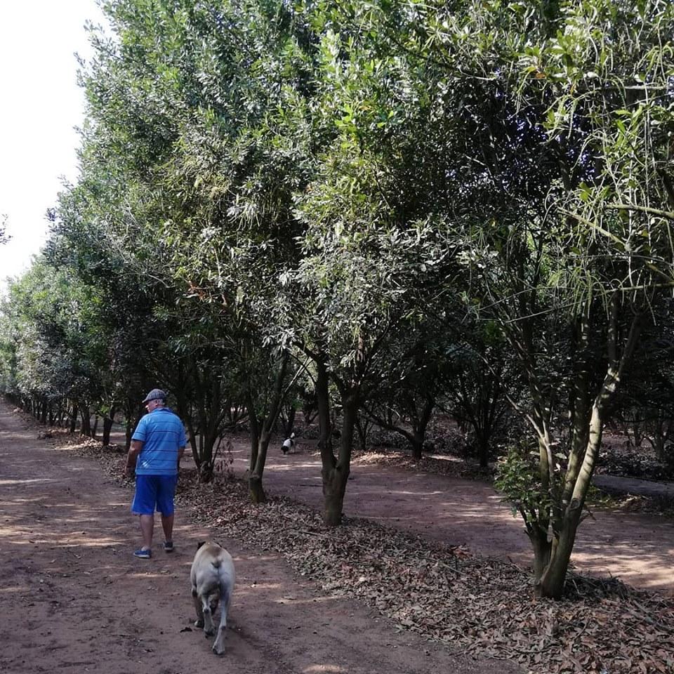 Bos-Paradys Backpackers, Hluhluwe, KwaZulu-Natal