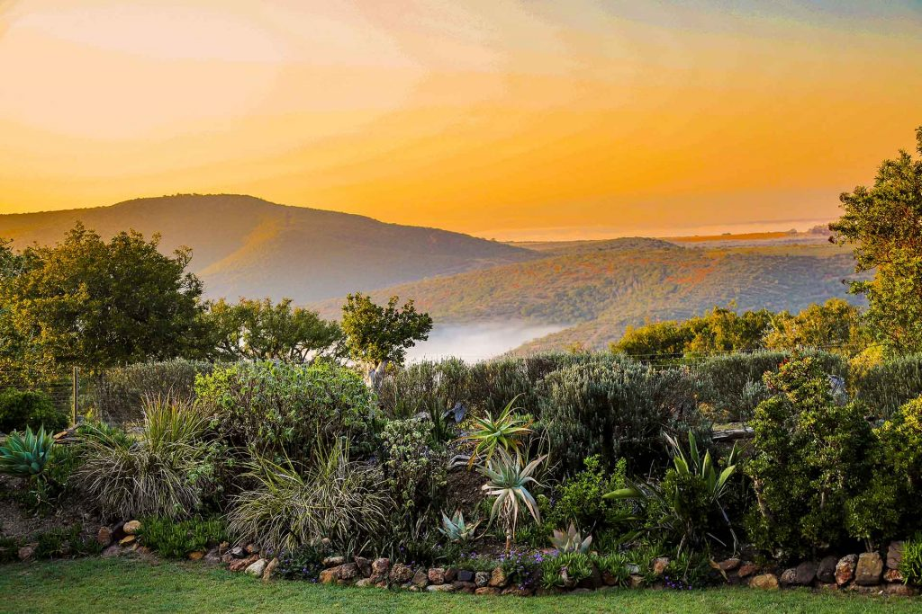 Bellevue Forest Reserve – Addo - Eastern Cape
