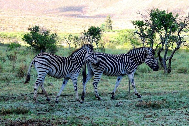 Boskloof Swemgat, Clanwilliam, Western Cape (9)