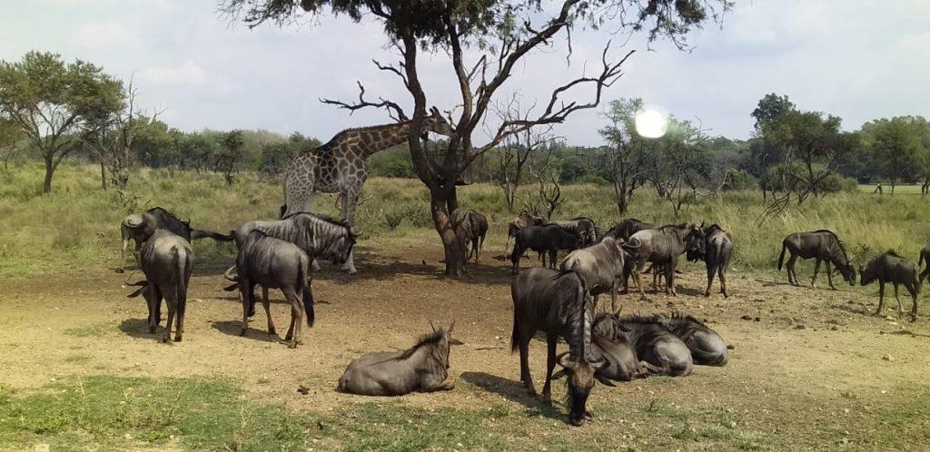 Boni Africa Safaris