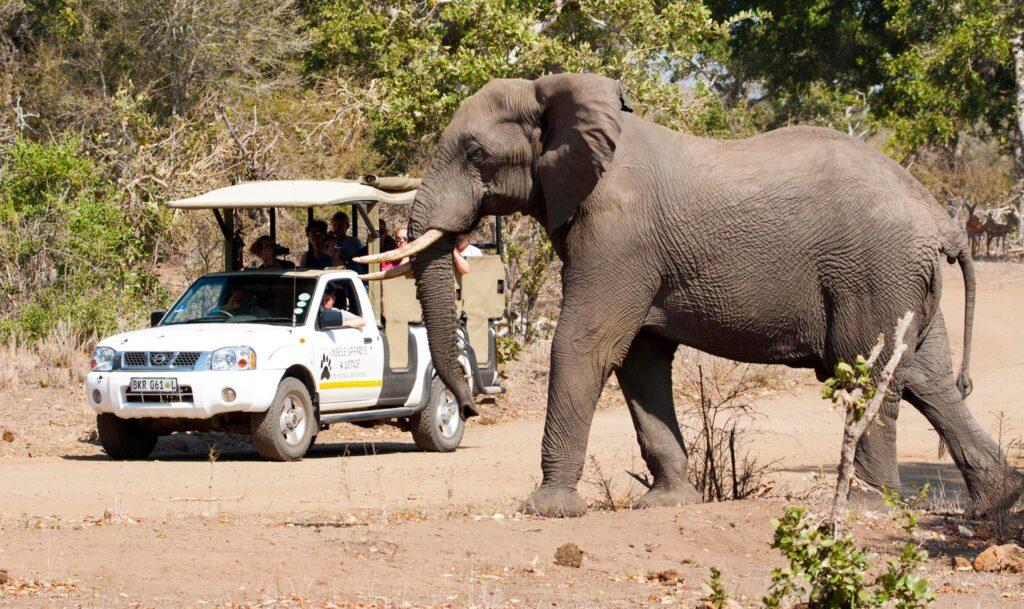 Nsele Safari's and Lodge
