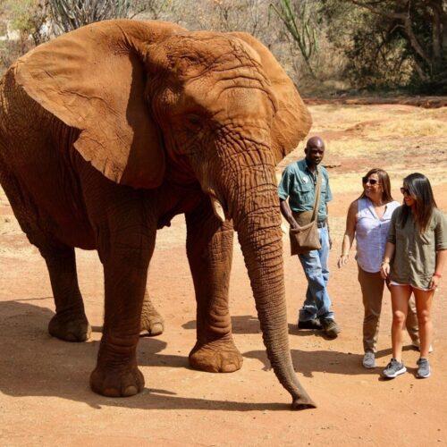 Hartbeespoort Elephant Sanctuary