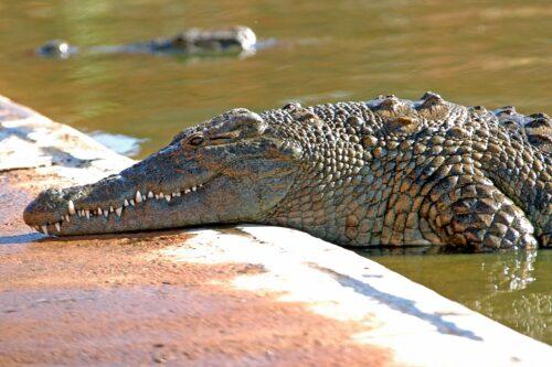 Thaba Kwena Crocodile Farm